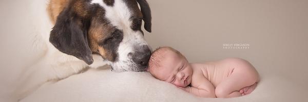 如何拍好狗狗和新生儿