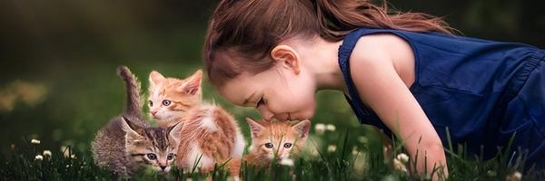 米亚的小猫咪