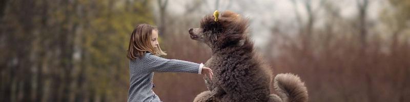 摄影师安迪镜头下的狗狗和孩子