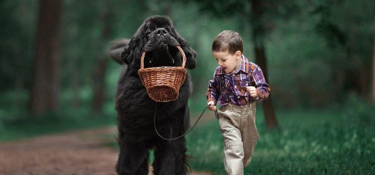 作品欣赏|Andy Seliverstoff 镜头下的小孩和大狗